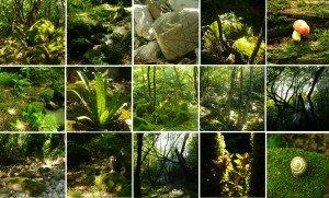 отдых на природе Сочи